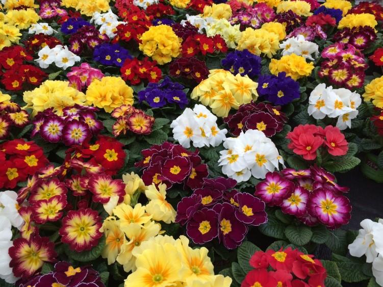 inspiration frühjahrsblumen