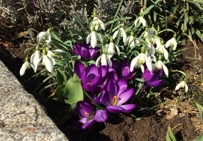 Mein Garten April 2016 (2)