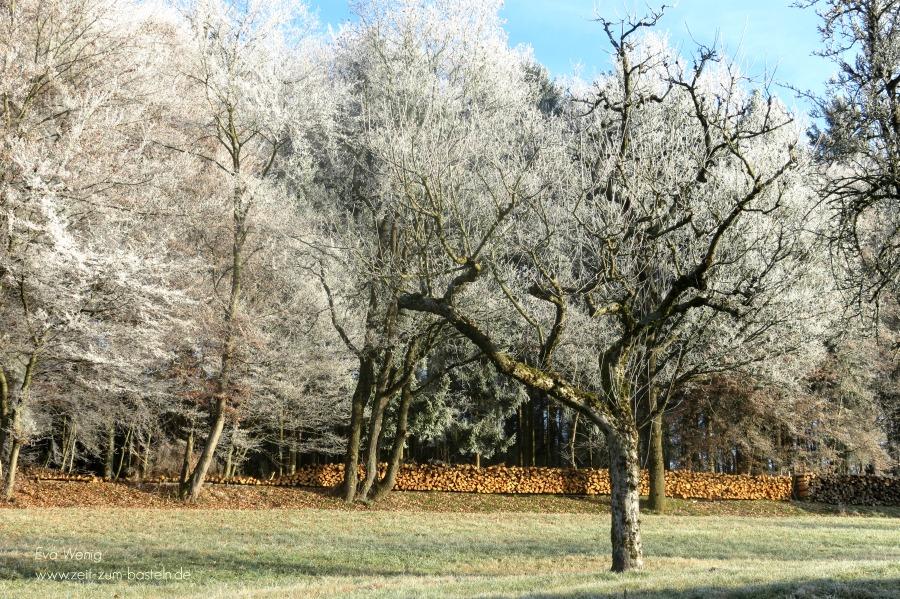 winter-wonderland-3