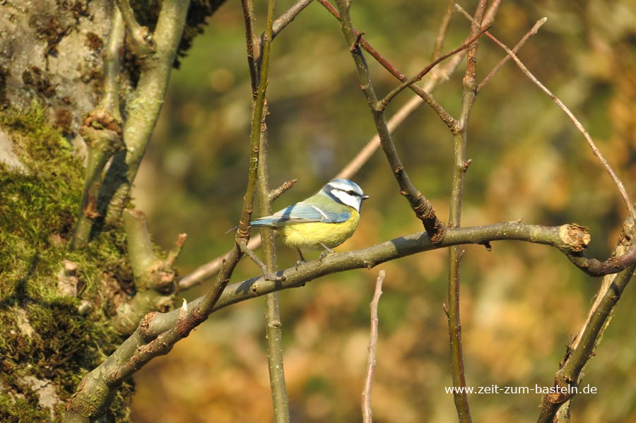 Vogelfütterung  und Inspriration für meinen Stickrahmen - Willkomomen bei uns