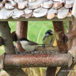 Vogelzeit